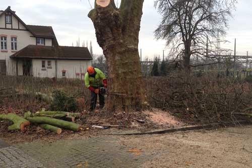 Garten Und Landschaftsbau Bochum gerhard pöhler garten und landschaftsbau bochum